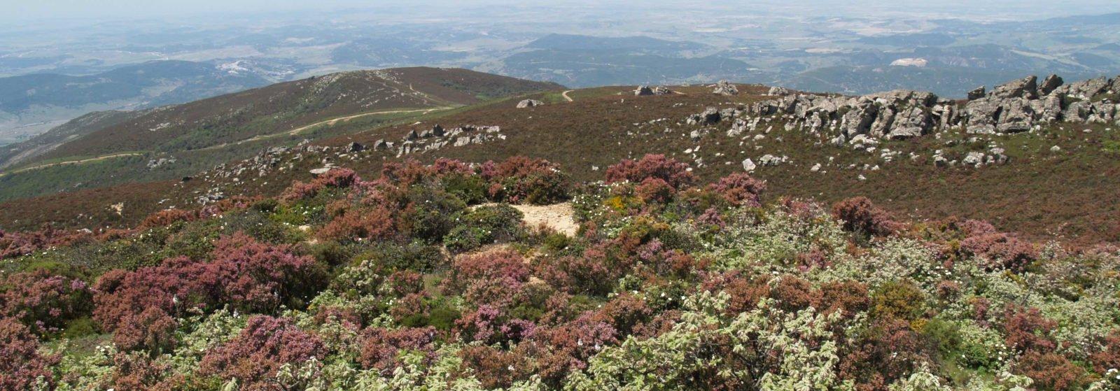 Paisaje de Herriza en el Campo de Gibraltar