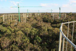 Andamios de mediación de CO2 en bosques de Eucaliptos